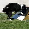 Aug2004Flyball 116.jpg