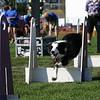Aug2004Flyball 051.jpg