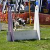 Aug2004Flyball 120.jpg