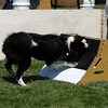 Aug2004Flyball 079.jpg