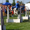 Aug2004Flyball 060.jpg