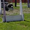 Aug2004Flyball 140.jpg