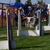 Aug2004Flyball 059.jpg