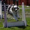 Aug2004Flyball 130.jpg