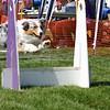 Aug2004Flyball 065.jpg