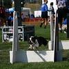 Aug2004Flyball 044.jpg