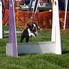 Aug2004Flyball 063.jpg