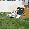Aug2004Flyball 108.jpg