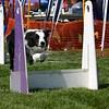 Aug2004Flyball 064.jpg