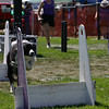 Aug2004Flyball 135.jpg