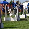 Aug2004Flyball 054.jpg
