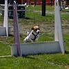 Aug2004Flyball 132.jpg