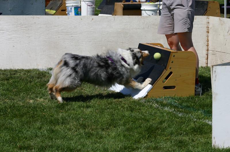 Aug2004Flyball 103.jpg