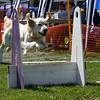 Aug2004Flyball 115.jpg