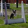 Aug2004Flyball 129.jpg