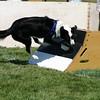 Aug2004Flyball 076.jpg