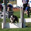 Aug2004Flyball 043.jpg