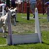 Aug2004Flyball 141.jpg
