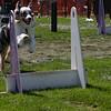 Aug2004Flyball 126.jpg