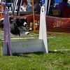 Aug2004Flyball 119.jpg