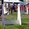 Aug2004Flyball 069.jpg