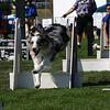 Aug2004Flyball 050.jpg