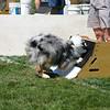 Aug2004Flyball 107.jpg