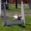 Aug2004Flyball 124.jpg