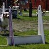 Aug2004Flyball 131.jpg