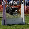 Aug2004Flyball 111.jpg