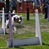 Aug2004Flyball 127.jpg