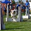 Aug2004Flyball 057.jpg