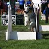 Aug2004Flyball 041.jpg