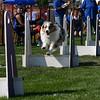 Aug2004Flyball 052.jpg
