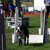 Aug2004Flyball 048.jpg
