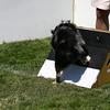 Aug2004Flyball 142.jpg