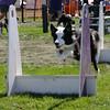 Aug2004Flyball 147.jpg