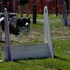 Aug2004Flyball 137.jpg