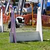Aug2004Flyball 121.jpg