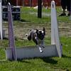 Aug2004Flyball 128.jpg
