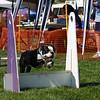Aug2004Flyball 062.jpg