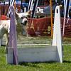 Aug2004Flyball 112.jpg