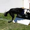 Aug2004Flyball 144.jpg