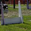 Aug2004Flyball 138.jpg