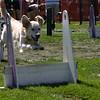 Aug2004Flyball 139.jpg