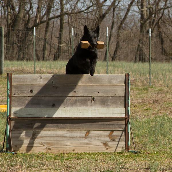Volunteer Schutzhund Club - Spring trials