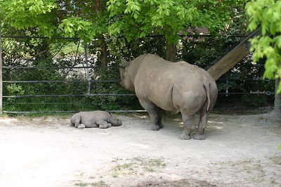 Rhinoseros and baby