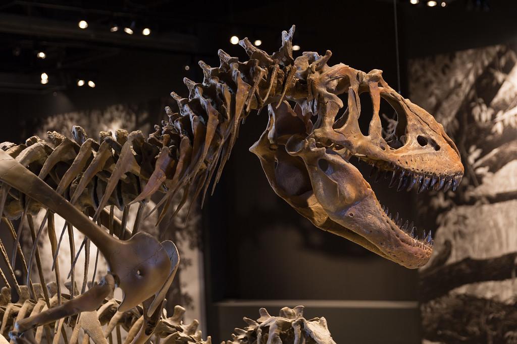 Dakota's Birthday trip to the Natural History Museum of Utah