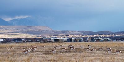 day break Antelope