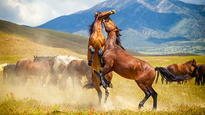 Horses doing horse things